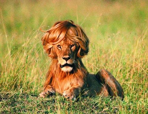 timotei-lion-ad.jpg